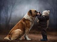 狗狗能照顾孩子吗