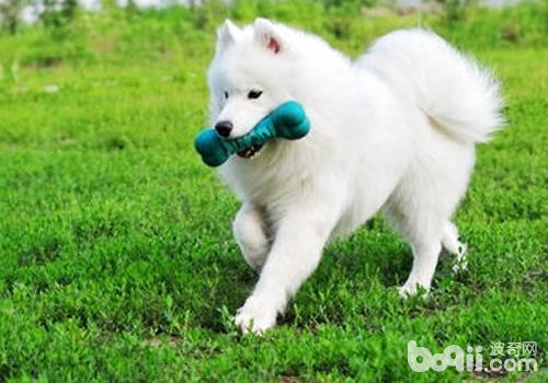 通过游戏加强狗狗的训练效果