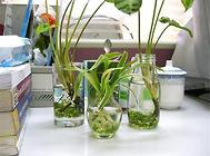 水培花卉换水洗根的方法介绍