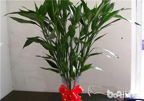 比较容易饲养的水养植物推荐