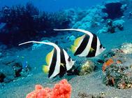 淡水觀賞魚的繁殖注意事項