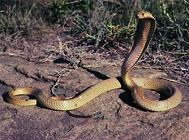 蛇常见的三种疾病及治疗办法