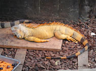 蜥蜴饲养箱的布置要点