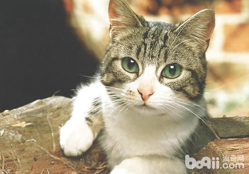新来的猫咪进家需要注意哪些
