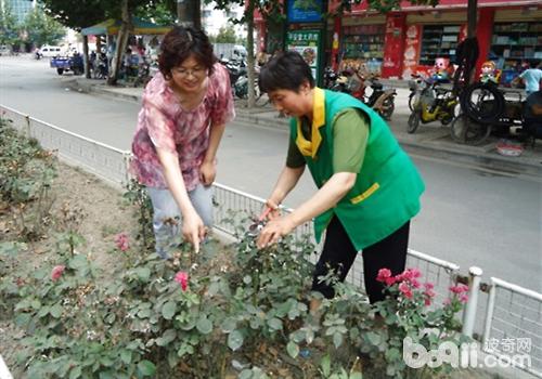 基本的步骤是;茶香月季(品种月季)每根枝条顶端保留一个花蕾,多花月季