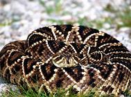如何判断蛇有没有毒