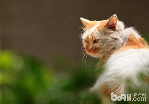 猫草应该怎么吃?