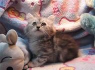 新生幼猫的护理要点