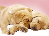 生殖激素对狗狗生殖机能的影响