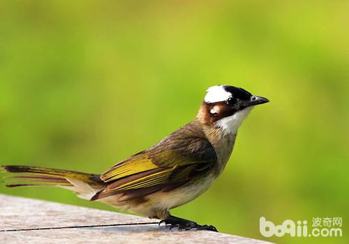 哪些鸟较易患螨虫