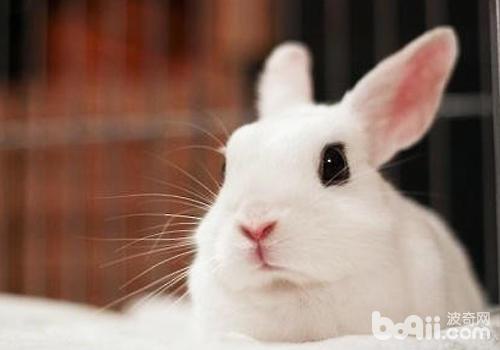兔子人工授精好不好-轻博客