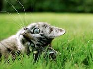 猫咪不断的洗脸是为什么?