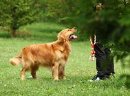狗狗的吻是否能带来益生菌