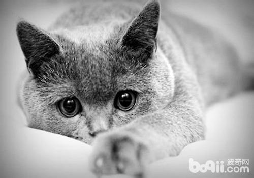 当你的猫咪老了该怎么办