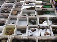 路边卖的小龟是什么品种?好养吗?