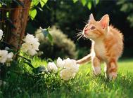春季带猫出游的注意事项