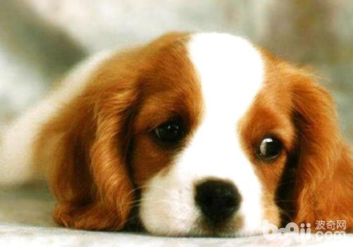 狗狗身上突然长包怎么办