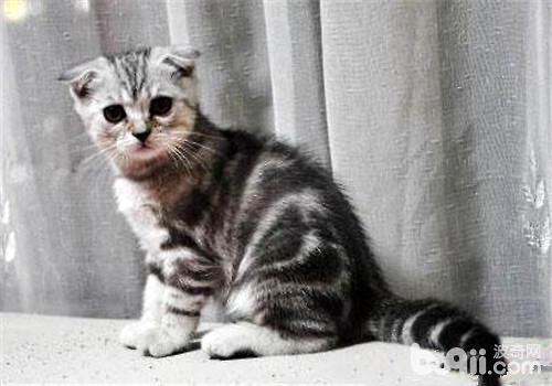 哪些品种的猫最友善?