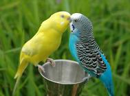 为何养鸟会养掉70斤肉