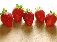 盆栽草莓施肥的目的之方法介绍