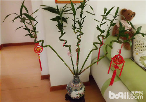 竹子修剪方法图解