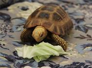 陆龟饲养箱如何布置?
