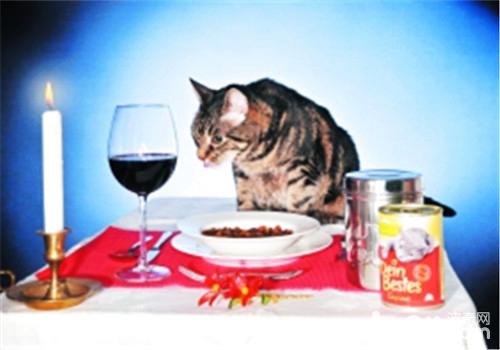 猫咪厌食不吃东西怎么办?