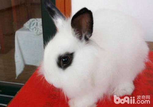 自己母兔生的兔子是否需要喂球虫药