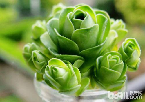 玫瑰植物变形图案设计