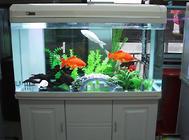 魚缸玻璃的材質有哪些