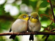 笼养鸟的隐患有哪些