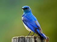 鸟笼的常用消毒方法及消毒药物有哪些