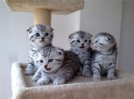 母猫吃小猫是为哪般?