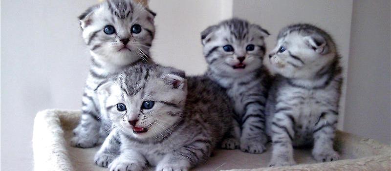 母猫吃小猫的前兆图片