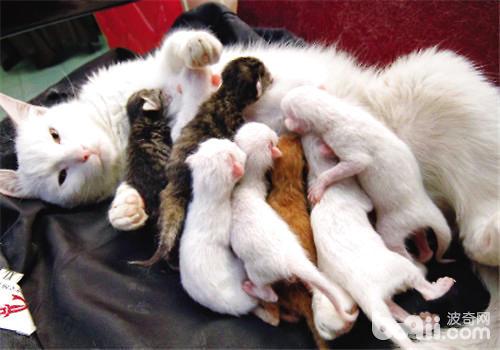 母猫吃小猫会留下头吗图片