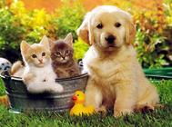 喜欢狗和喜欢猫的人有什么区别