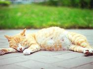公猫绝育后性格会有变化吗?