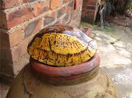 黄额闭壳龟价格,黄额闭壳龟多少钱?