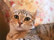 猫咪为什么会患皮肤病?如何治疗?