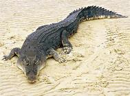 世界上最大与最小的爬行动物