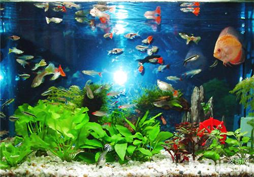 壁纸 海底 海底世界 海洋馆 水草 水生植物 水族馆 500_350