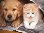 狗和猫咪是否天生就敌对