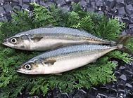早春时节注意预防鱼类两种疾病