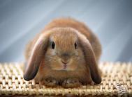 多雨季节养兔需要注意哪些问题