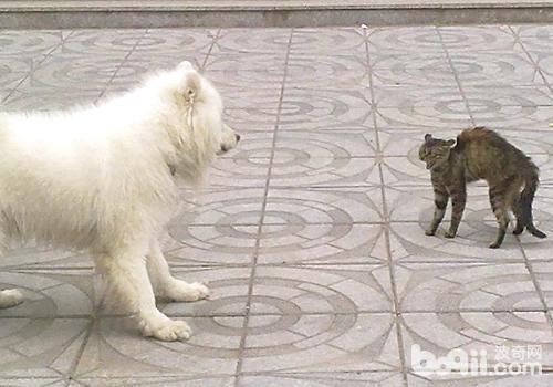 小色狗和猫交配_狗和猫咪是否天生就敌对