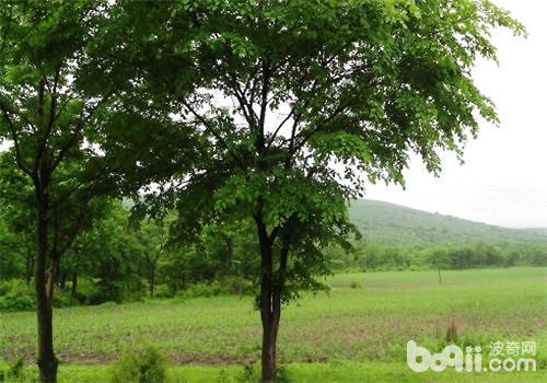 树木移植的三个保湿方法