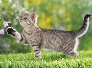 猫咪毛发护理非常重要