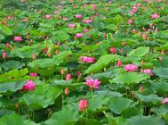 水生植物的饲养要点
