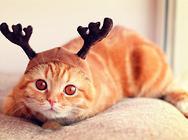 猫咪绝育你担心哪些问题?