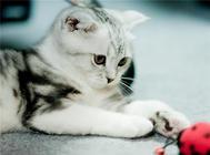 猫咪绝育手术后的护理要点